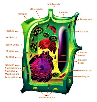struktur sitoplasma