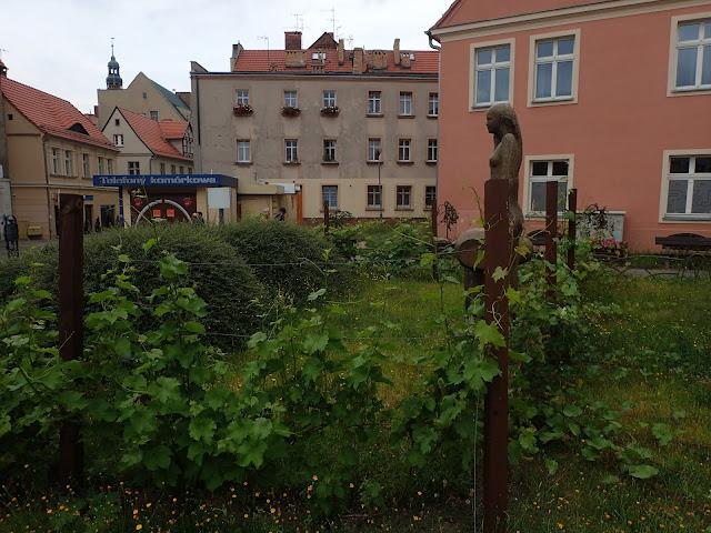 Zielona Góra jako polska stolica wina może poszczycić się wszechobecnymi pnączami winorośli