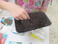 Depositar las semillas
