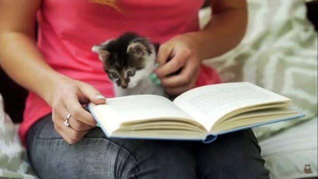 Um estudo mostra benefícios de redução do estresse ao acariciar cães e gatos