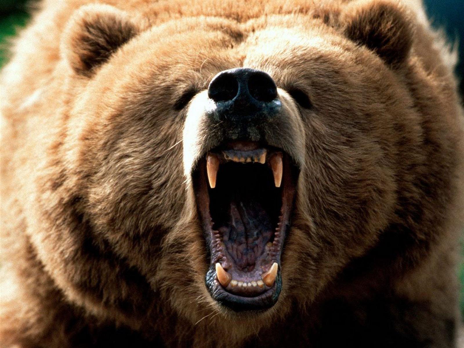 Fantastica Animal: Grizzly Bear