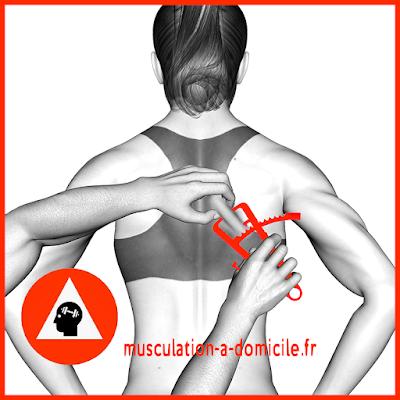 mesure dos femme pince à plis cutanés adipomètre musculation fitness