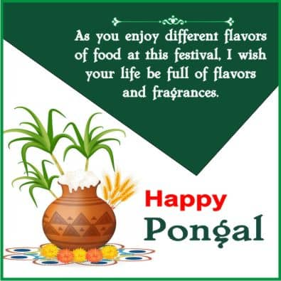 pongal festival wishes