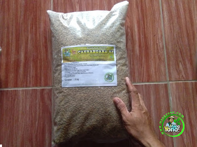 PETANI Sumedang, Jabar. Pembeli Benih Padi CAKRABUANA 02 (CB02) 90 HST Panen