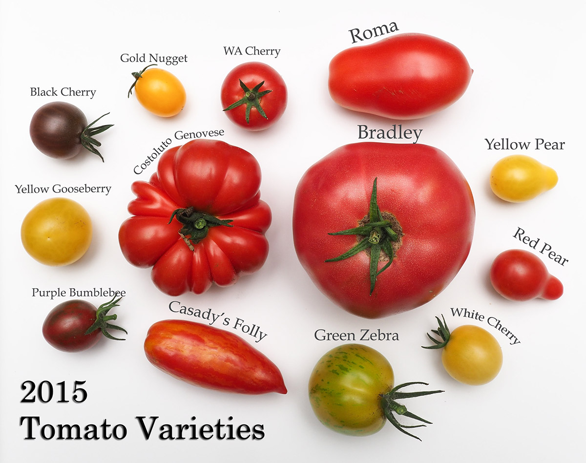 tomato and pepper varieties 2016 gapey s grub