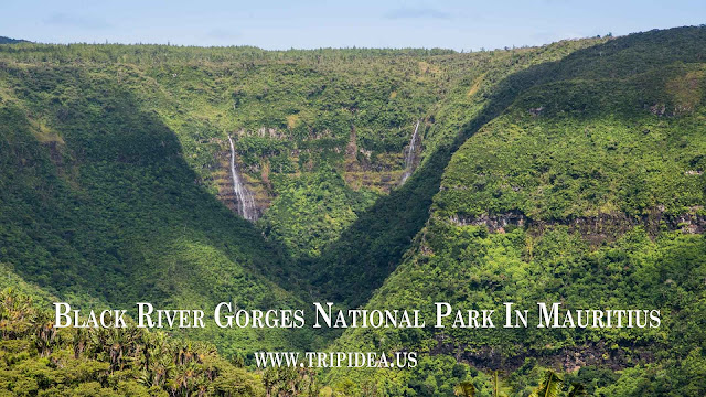 Black River Gorges National Park In Mauritius
