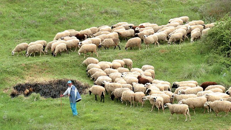 Ανακοίνωση των Κτηνοτροφικών Συλλόγων Αν. Μακεδονίας και Θράκης