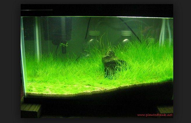 Harga tanaman aquascape