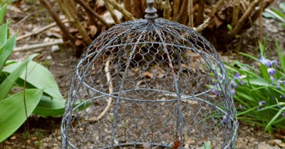 Farmhouse Musings Chicken Wire Cloche For Plant Protection