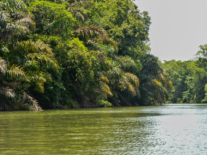 The beautiful canals of Tortuguero, Costa Rica