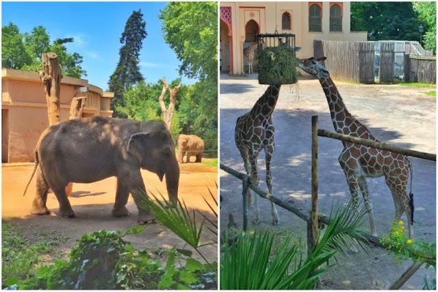 Elefantes y jirafas en el zoológico Bioparco dentro del parque Villa Borghese de Roma