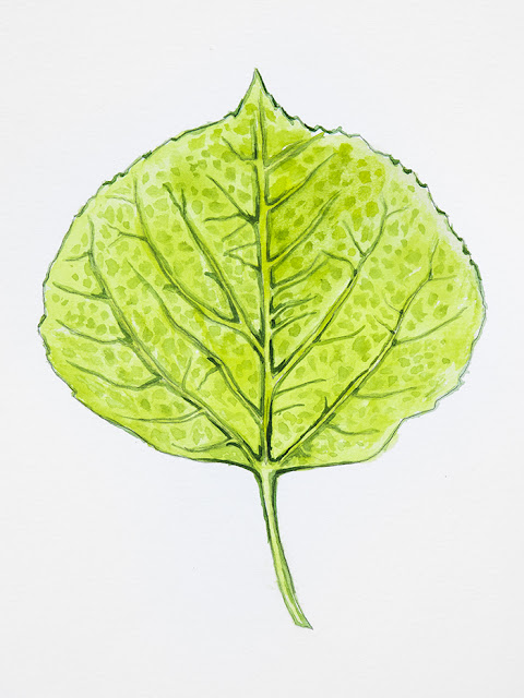 http://aaronspong.com/featured/aspen-leaf-green-aaron-spong.html
