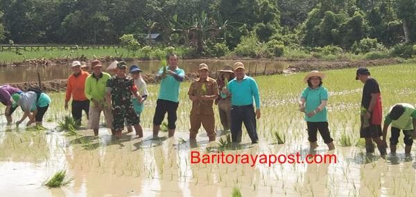 Kepala Dinas Bartim Tinjau Langsung Lahan Penangkaran Padi Di Desa Kupang Bersih