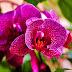 Bolile comune ale orhideelor