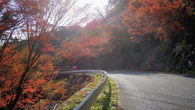 君津から鹿野山に上り、マザー牧場経由でもみじロードへ。佐久間ダムを通って岩井海岸へ下り、富浦まで走る。もみじロードだけに紅葉の時期に行きたいサイクリングコース。