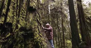 най-старите и най-големи живи дървета в света