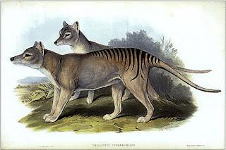 タスマニアタイガー (Tasmanian Tiger)