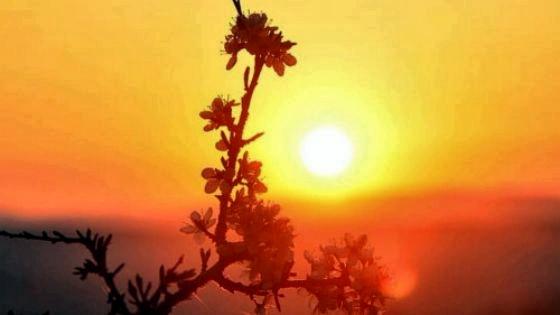 Магия солнечного света: как притянуть удачу при помощи весеннего солнца