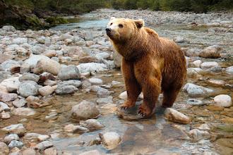 Συνάντηση Συντονιστικής Επιτροπής Διαχείρισης Κρίσεων Περιστατικών προσέγγισης αρκούδας σε κατοικημένες περιοχές