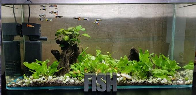 ตู้ปลา ประจำบ้าน