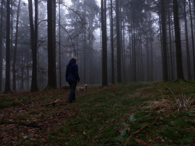 Jahresrückblick Wald wandern barfußwandern Wanderschuhe Moos Hund Winter Achtsamkeit Entschleunigung