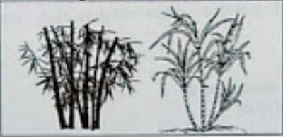 Perhatikan gambar tumbuhan berikut! Kedua tumbuhan ...