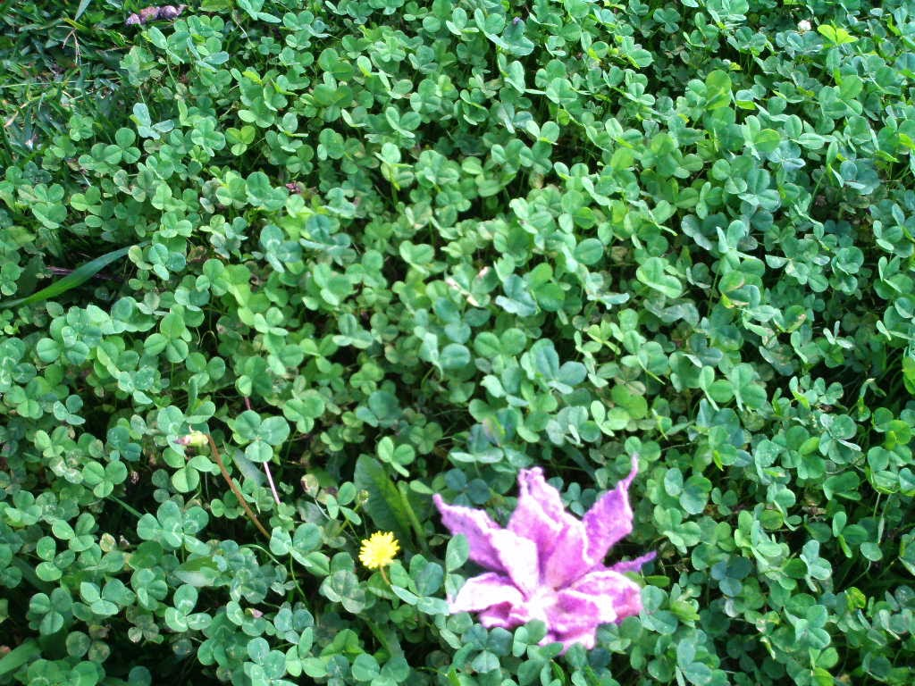 flor feltrada rosa no meio de trevos de três folhas