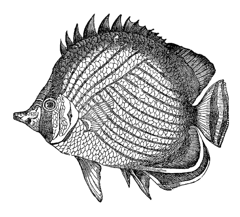 Antique Images Fish Clip Art Vintage Black And White