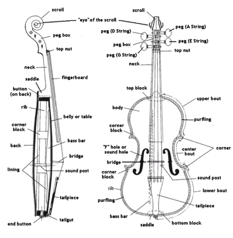 Violin Useful Information: The Anatomy of a Violin