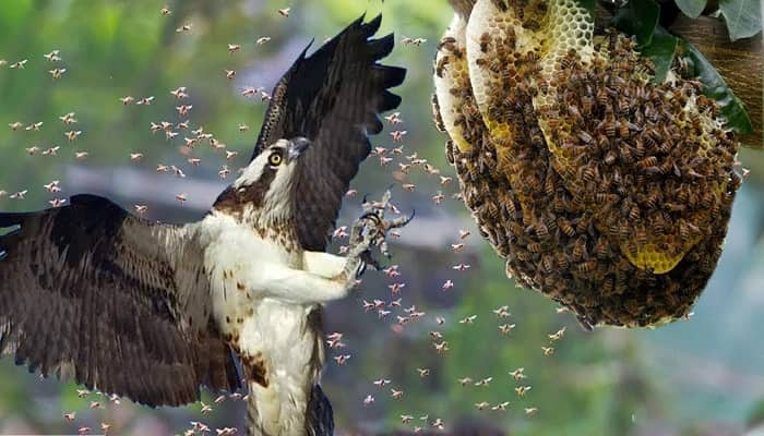 Know the Bird that Boldly Puts Its Mouth in a Beehive to Eat Honey and Its Larvae?
