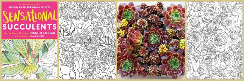 Sensational Succulents Debra Lee Baldwin y Laura Serra