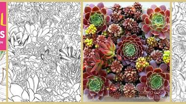Libro para colorear suculentas. Sensational Succulents