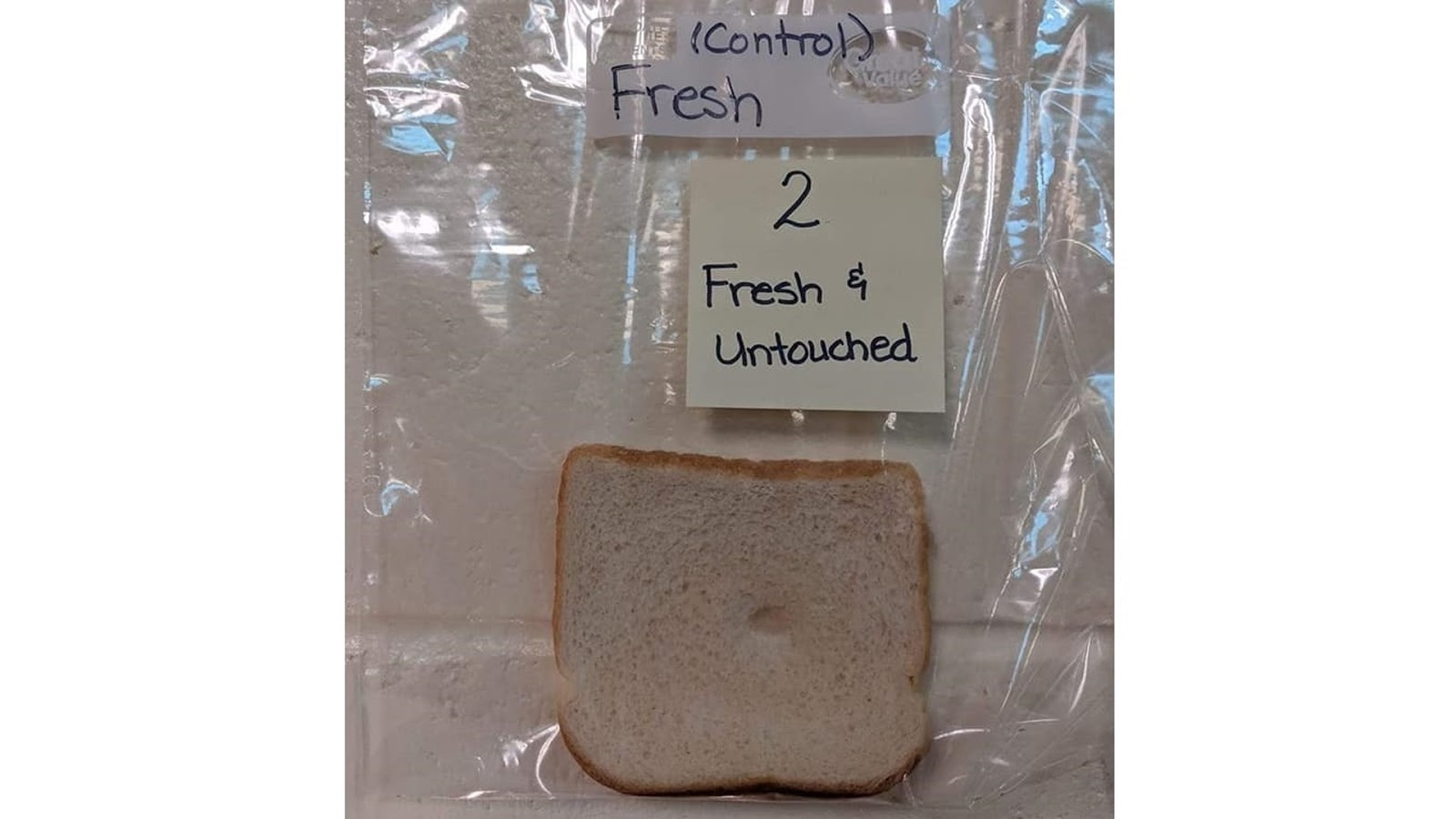 "A ""control"" slice of bread that no one has touched."
