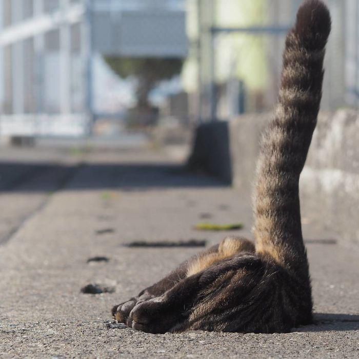 kucing imut banget