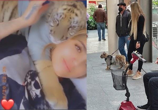 En su cama, preciosa mujer exhibía su cachorro de tigre en las redes sociales,  (Video)