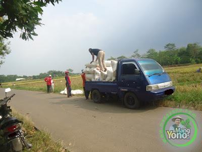 FOTO 5 : Pengangkutan Pengemasan Padi Trisakti
