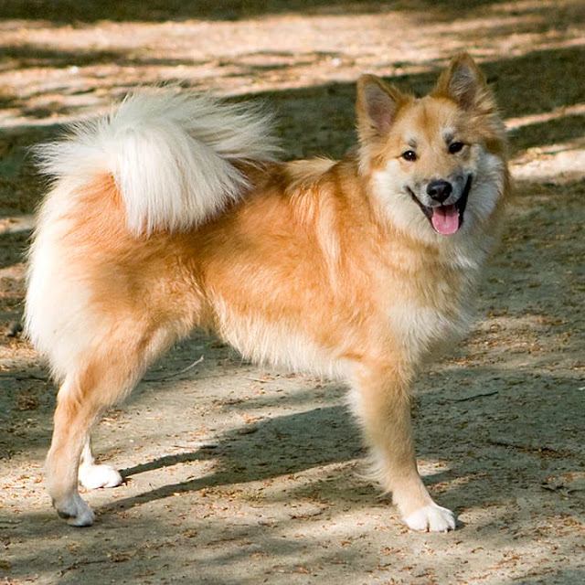 Top 10 Most Beautiful Dog Breeds