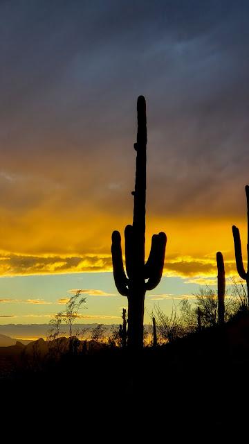 HD wallpaper cacti, Evening, Sunset, Desert