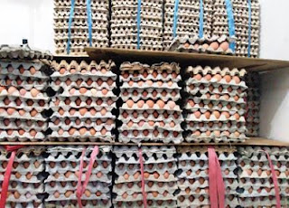 supplier telur terdekat Jakarta Barat