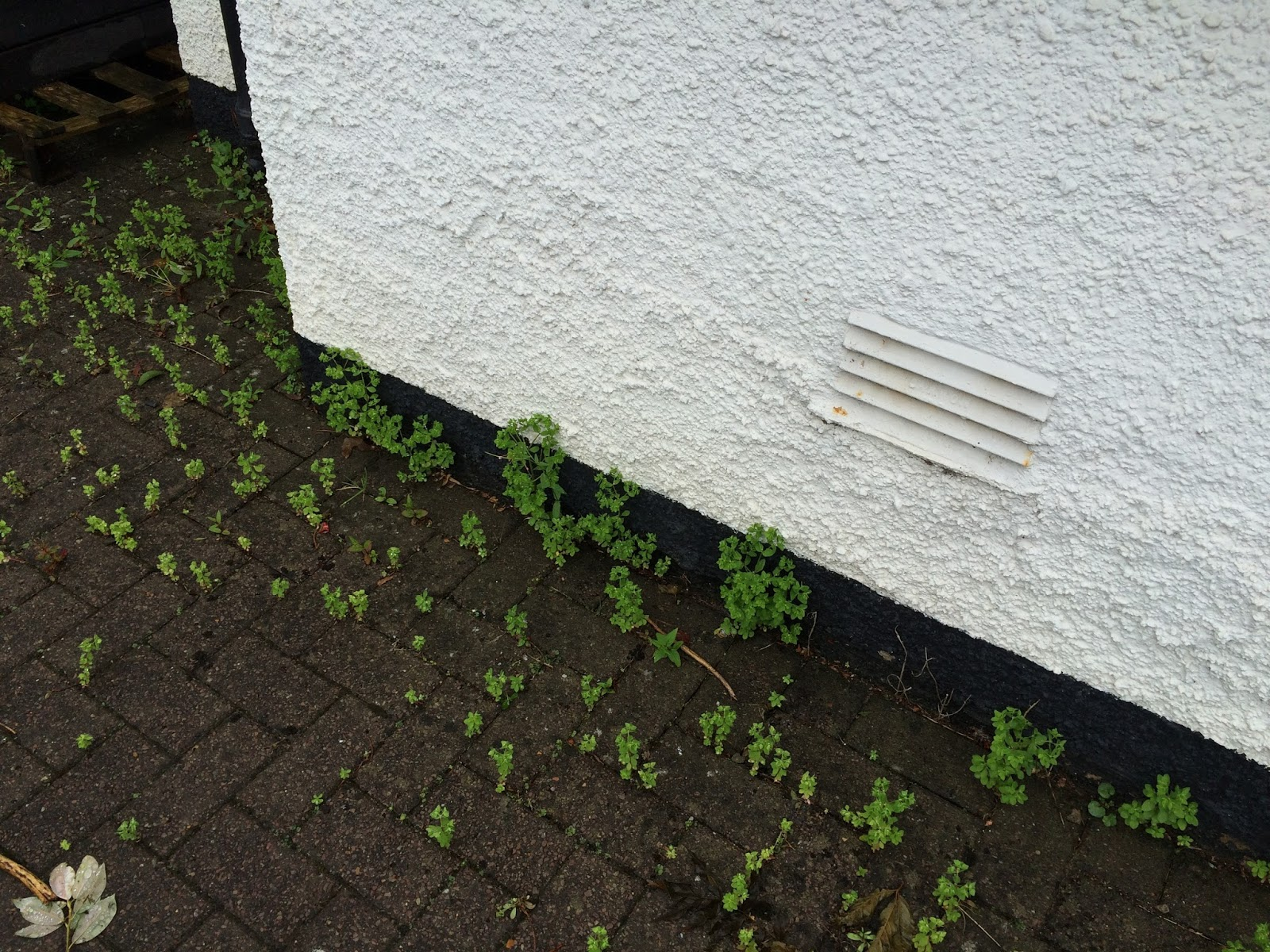 garden clean up - weeds on block paving