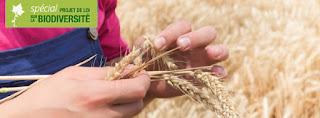 http://www.actu-environnement.com/ae/news/loi-biodiversite-semences-paysannes-assemblee-ouverture-echanges-agriculteurs-26464.php4