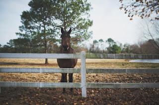 Un cheval dans la prairie