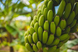 pisang, hijau, paket, kokain