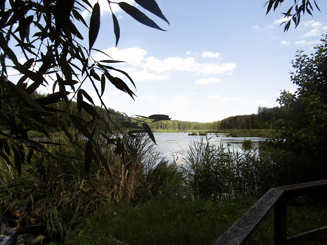 drewniana kładka, Nadleśnictwo Parczew, Leśnictwo Jedlanka, ścieżka edukacyjna, weekendowy wypad