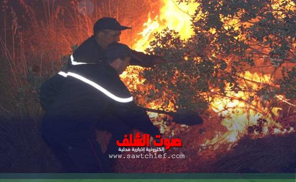 الحرائق تتلف أزيد من 30 هكتار من المساحات الغابية ببلديات الشلف