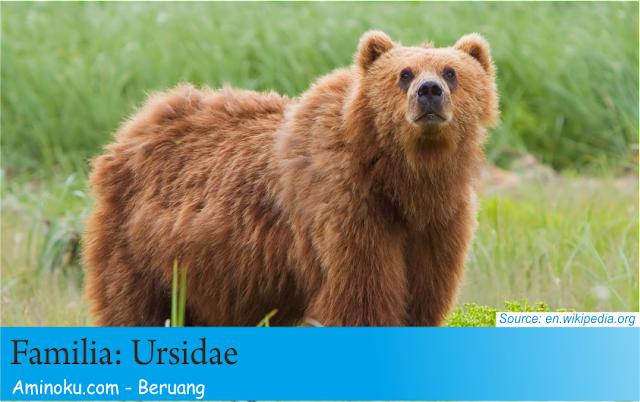 Fakta unik beruang