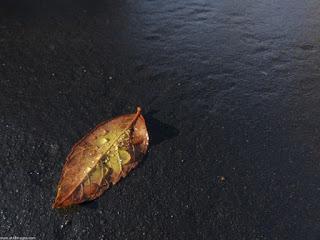 صور شتاء 2019 صور معبرة عن برد الشتاء