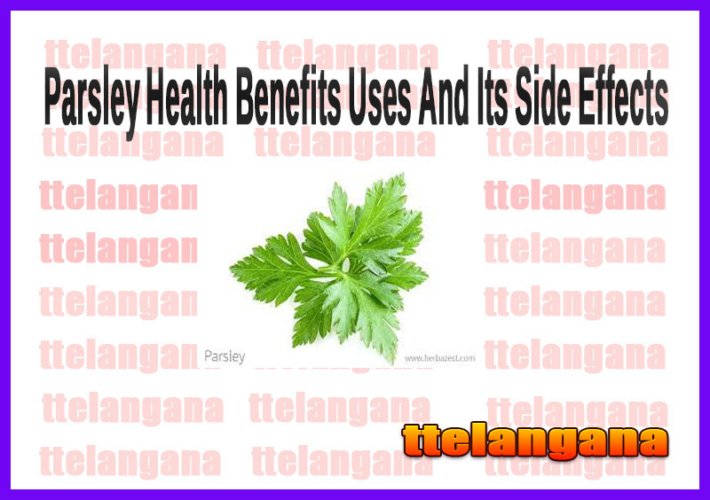Parsley Health Benefits Uses And Its Side Effects