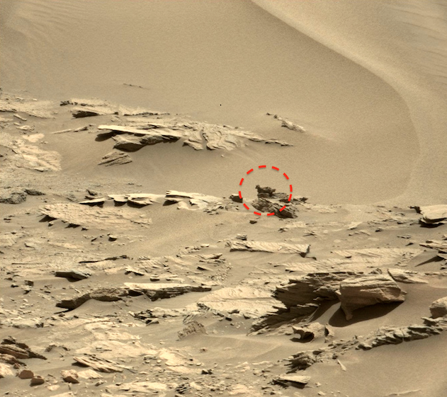 UFO SIGHTINGS DAILY: Bird Resting In Nest Found On Mars In ...
