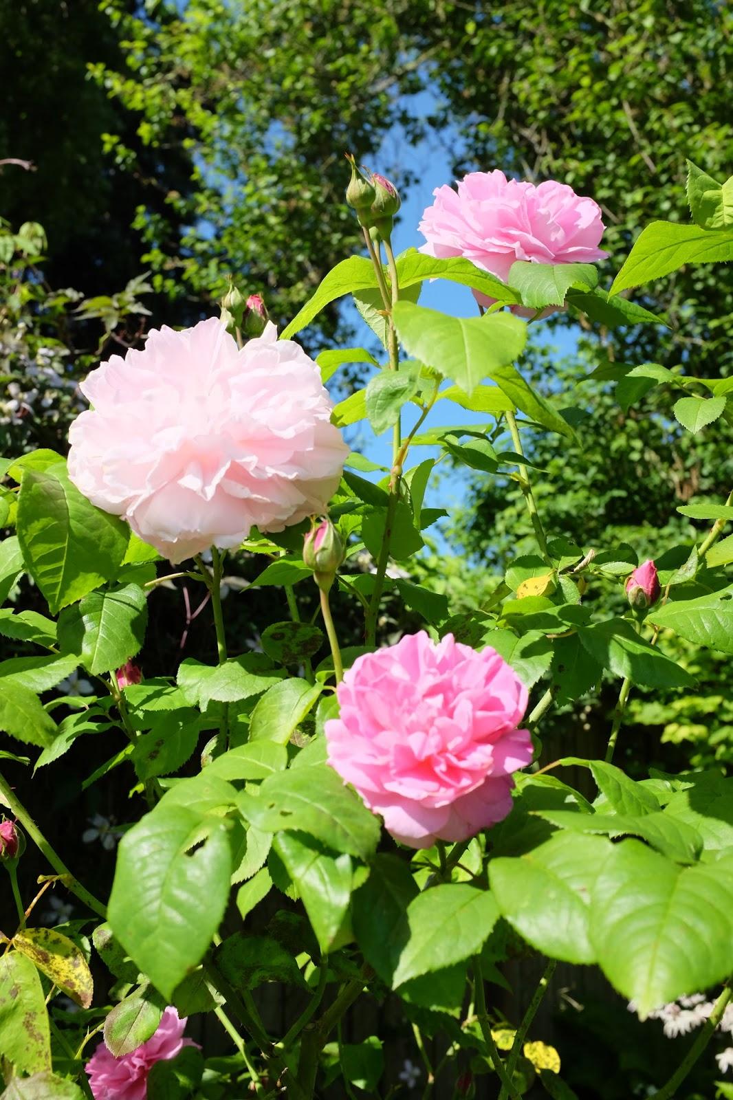 Megan Seagren 39 S Journal How To Plan A Garden